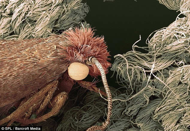 Cose Up Look At The Creepy Crawlies That Lurk In Your
