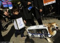 Halloween 2011 costumes for dogs: Lady Gaga, New York bus ...
