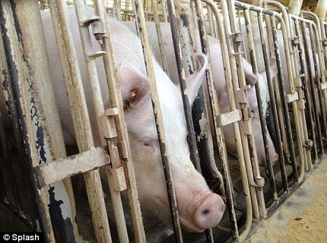 It\u0027s a hellhole\u0027 Shocking footage shows farm workers \u0027kicking and