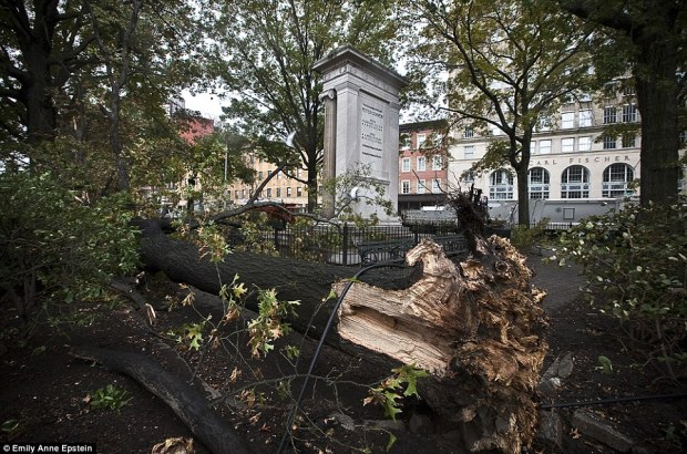Uprooted: A fallen tree at Cooper Square in the East Village, New York, after Superstorm Sandy battered the city