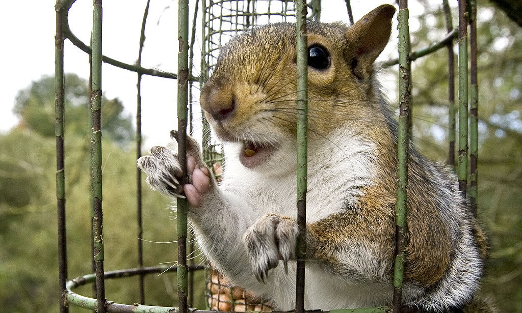 Large Newborn Stroller Hungry Squirrel Trapped In Bird Cage Daily Mail Online