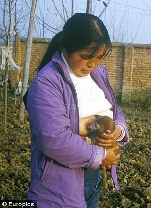 Breastfeeding one of the monkeys