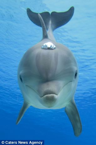 Cute Baby Dolphin Wallpaper Forever Blowing Bubbles Playful Dolphins Show Off Their