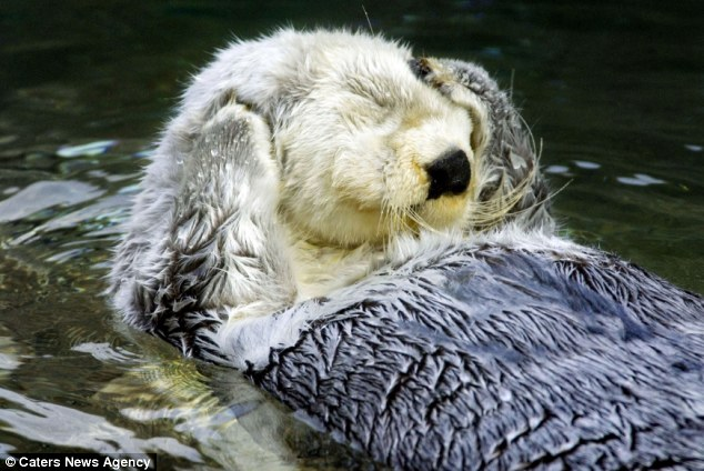 Cute Baby Couple Hug Wallpaper I M Ready For My Close Up Shutter Shy Otter Finally Warms