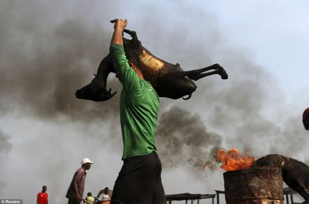 A man lifts a roasted goat on his shoulder through the Swali slaughter site in Yenagoa