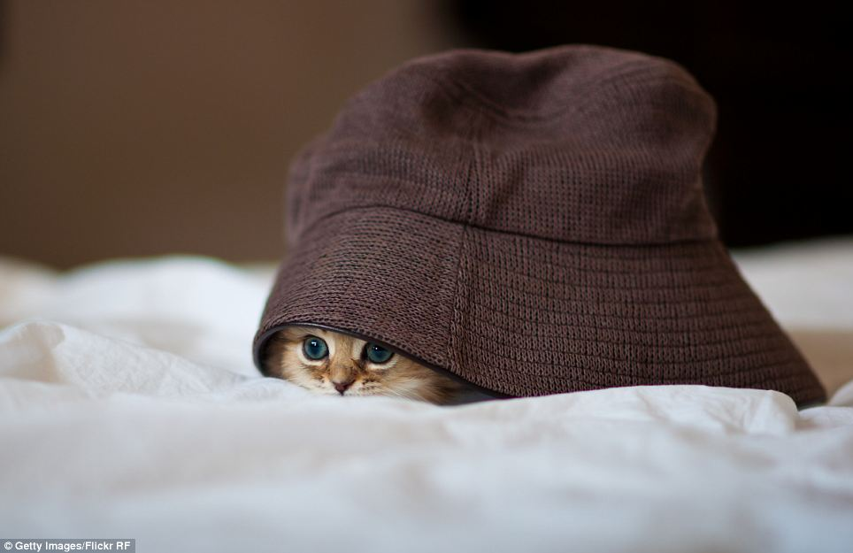 cat in the hat online