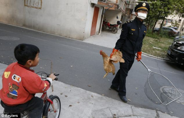 A city management officer holds a chicken as a boy rides past in a residential neighbourhood yesterday