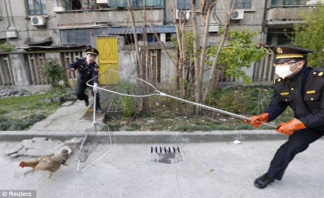 A group of city management force conducted a two-day campaign, capturing and slaughtering poultry raised in local residential areas of Jiaxing