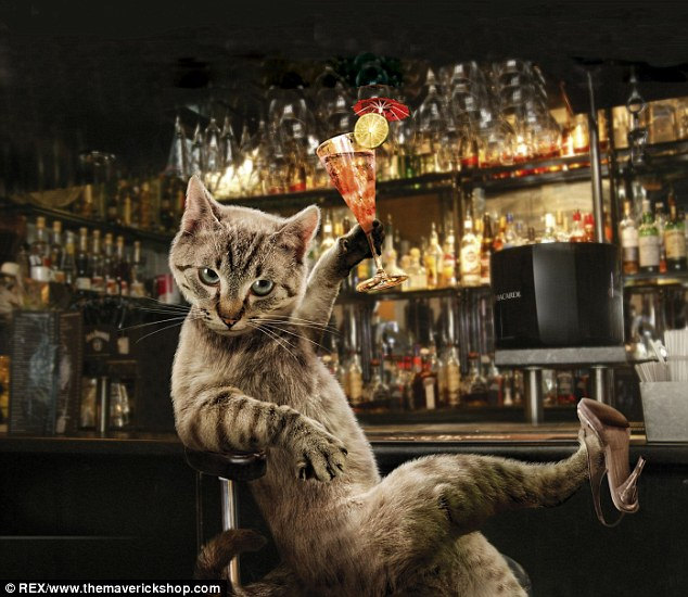 Puss In Boots Wallpaper Hd Meet The Real Glamour Pusses Cats Given Foxy Makeovers