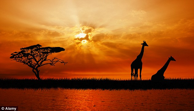 Bing Animated Wallpaper Wildlife Wonder And Why Tourism Can Help Kenya Emerge