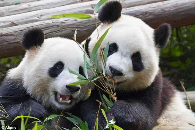 Cute Baby And Mother Wallpaper Holidays In China Snuggle Up To A Panda In Chengdu
