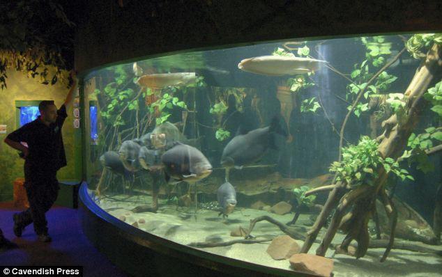 Monster fish tanks for sale monster fish keepers tanks for Monster fish keepers
