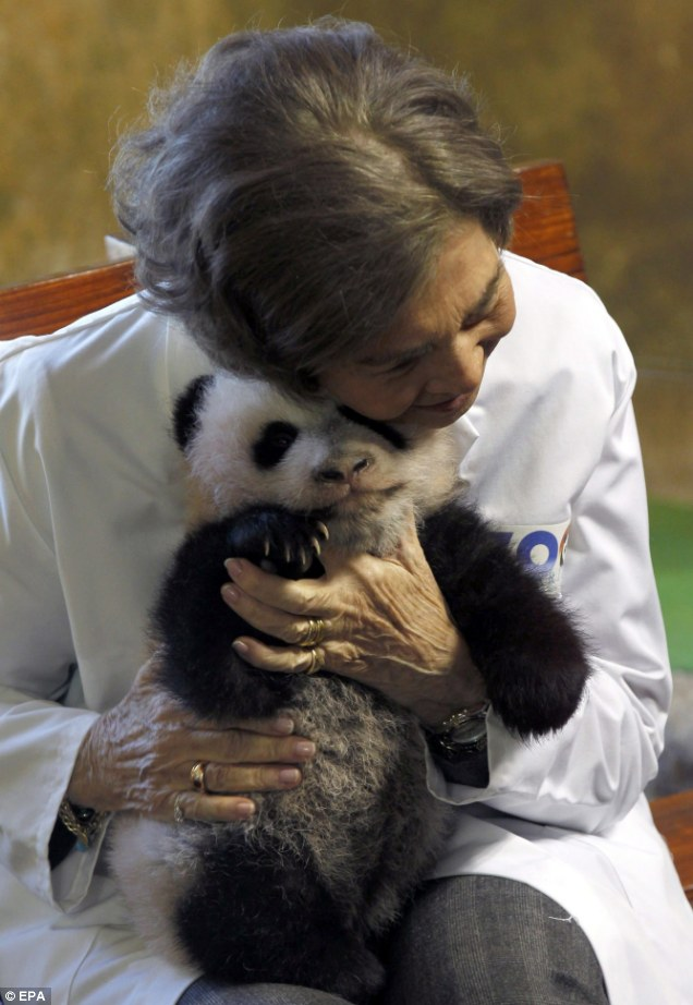 Regal 28 X 28 Queen Of Spain Enjoys A Cuddle With A Panda Cub | Daily