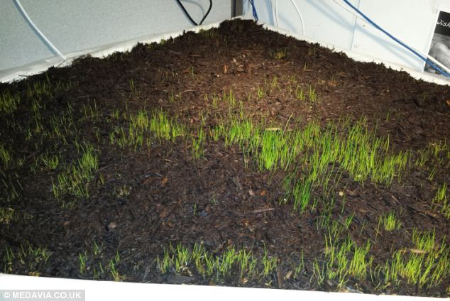 What On Turf Is Growing On My Desk? Engineer Returns From Three