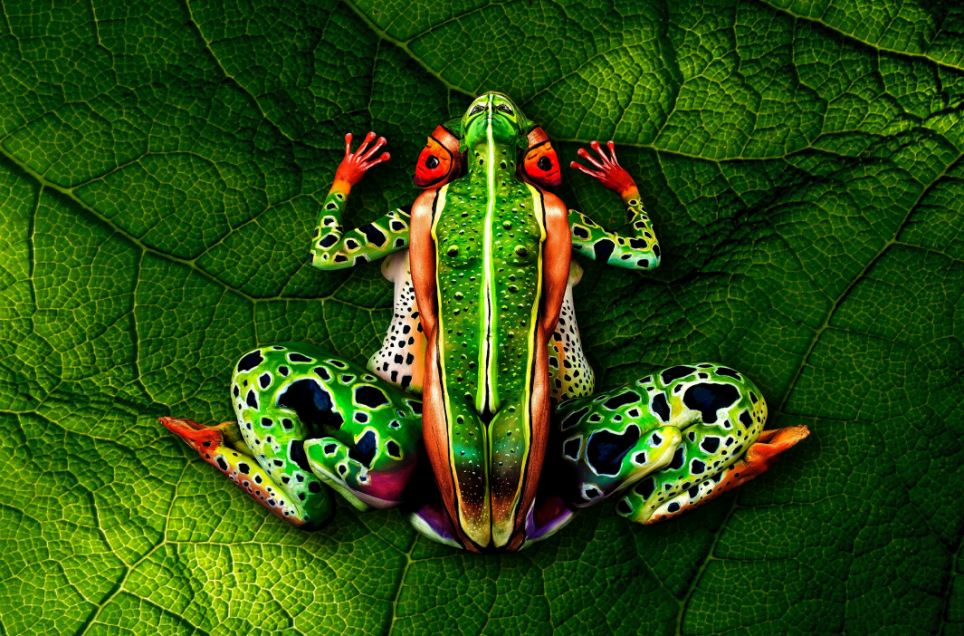 Look carefully this isn\u0027t really an exotic frog Incredible - frog body