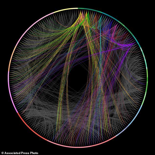 Scientists reveal the \u0027landmark\u0027 wiring diagram of mouse brain - and