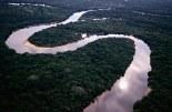 Brazil Amazon Rainforest Facts