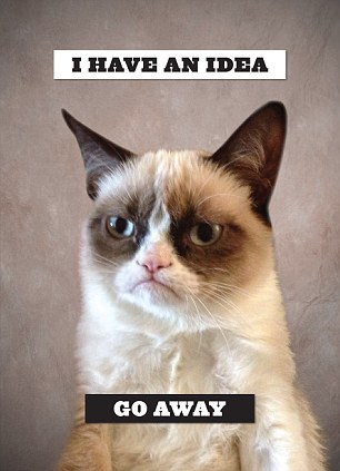 Feeling Low Quotes Wallpaper Grumpy Cat S Manager Ben Lashes Reveals What It Takes To