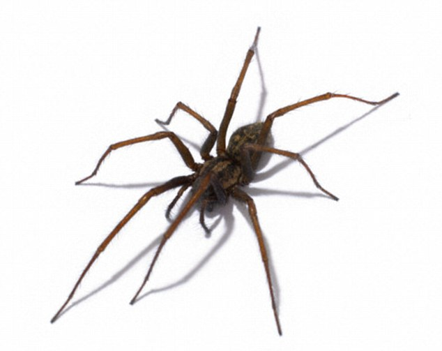 Want to know exactly what type of spider is invading your home