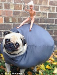 Doe-eyed dogs in fancy dress are stars of new photography ...