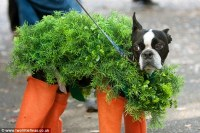 See adorable animals dressed up for Halloween | Daily Mail ...