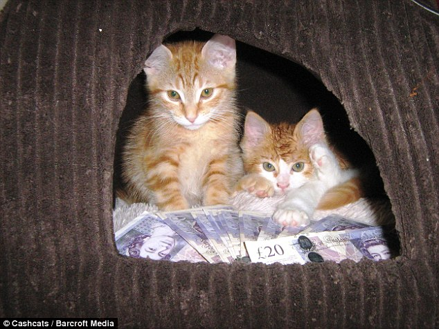 Cute Crisp Wallpapers World S Wealthiest Cats Pose On Site Featuring Top One