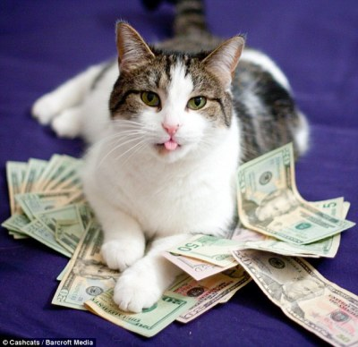 World's wealthiest cats pose on site featuring top 'one purrcent' of moggies | Daily Mail Online