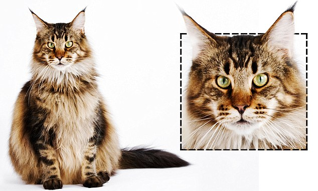 Pet researcher claims a feline\u0027s features can reveal its personality