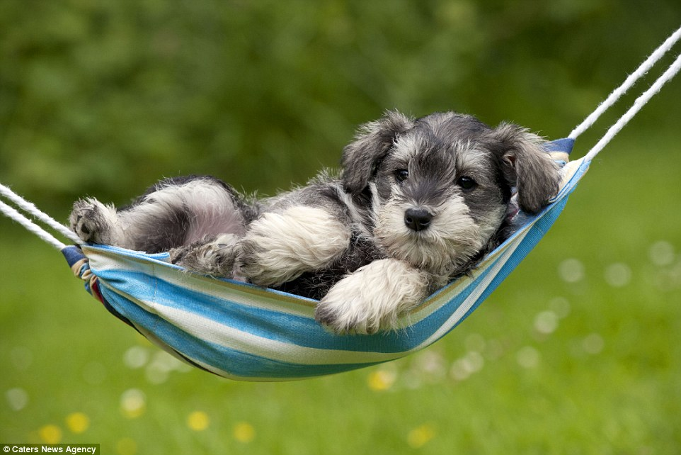 Cute Wallpapers Of Kittens And Puppies Puppies Relax In Striped Hammocks In Heartwarming Photos