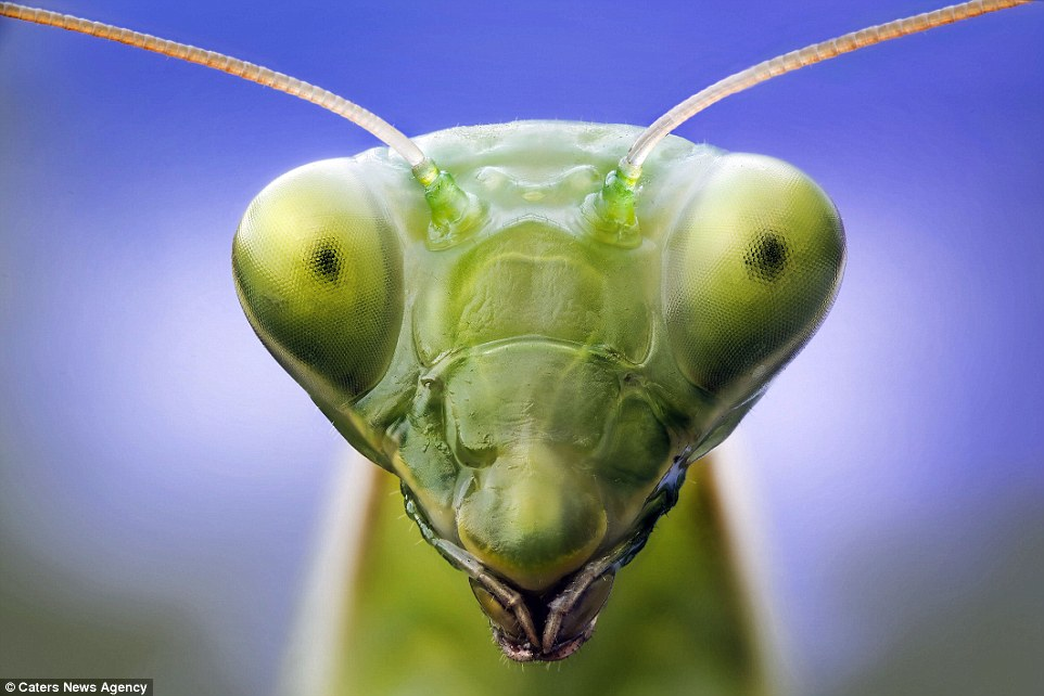 Bugs\u0027 eyes close up photographs show amazing detail of how they see