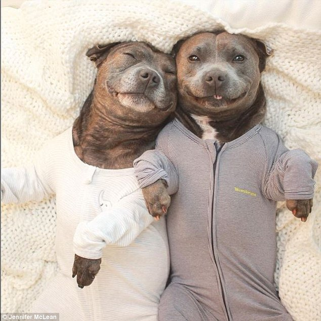 Cute Twins Baby Hd Wallpaper Darren And Phillip The English Staffordshire Terriers