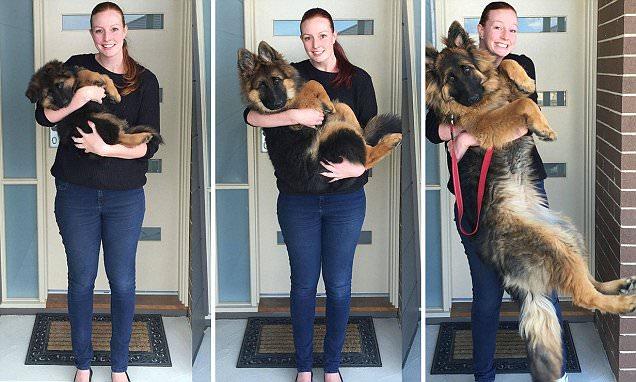 Reddit couple document their dog\u0027s extraordinary growth spurt in