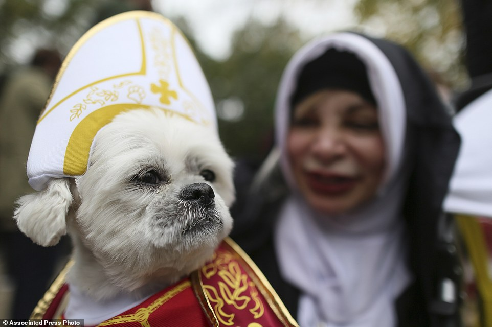 Hundreds of dogs dress up for 25th Halloween parade in New