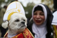 Hundreds of dogs dress up for 25th Halloween parade in New ...