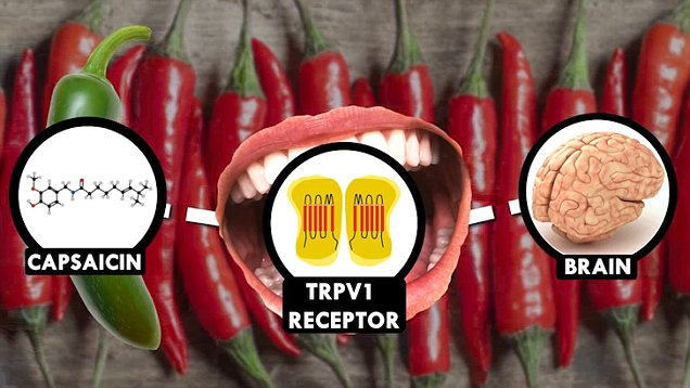 Pepper X set to break record for world\u0027s hottest pepper Daily Mail