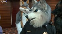 Chicago's Furry Convention begins as people create ...