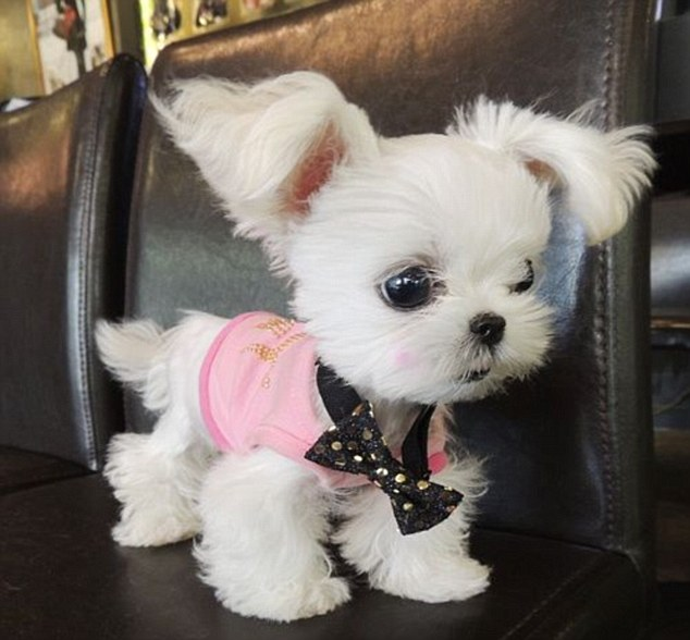 Wallpapers Fofo Cutes The Cutest Dog In The World According To Instagram Usrs
