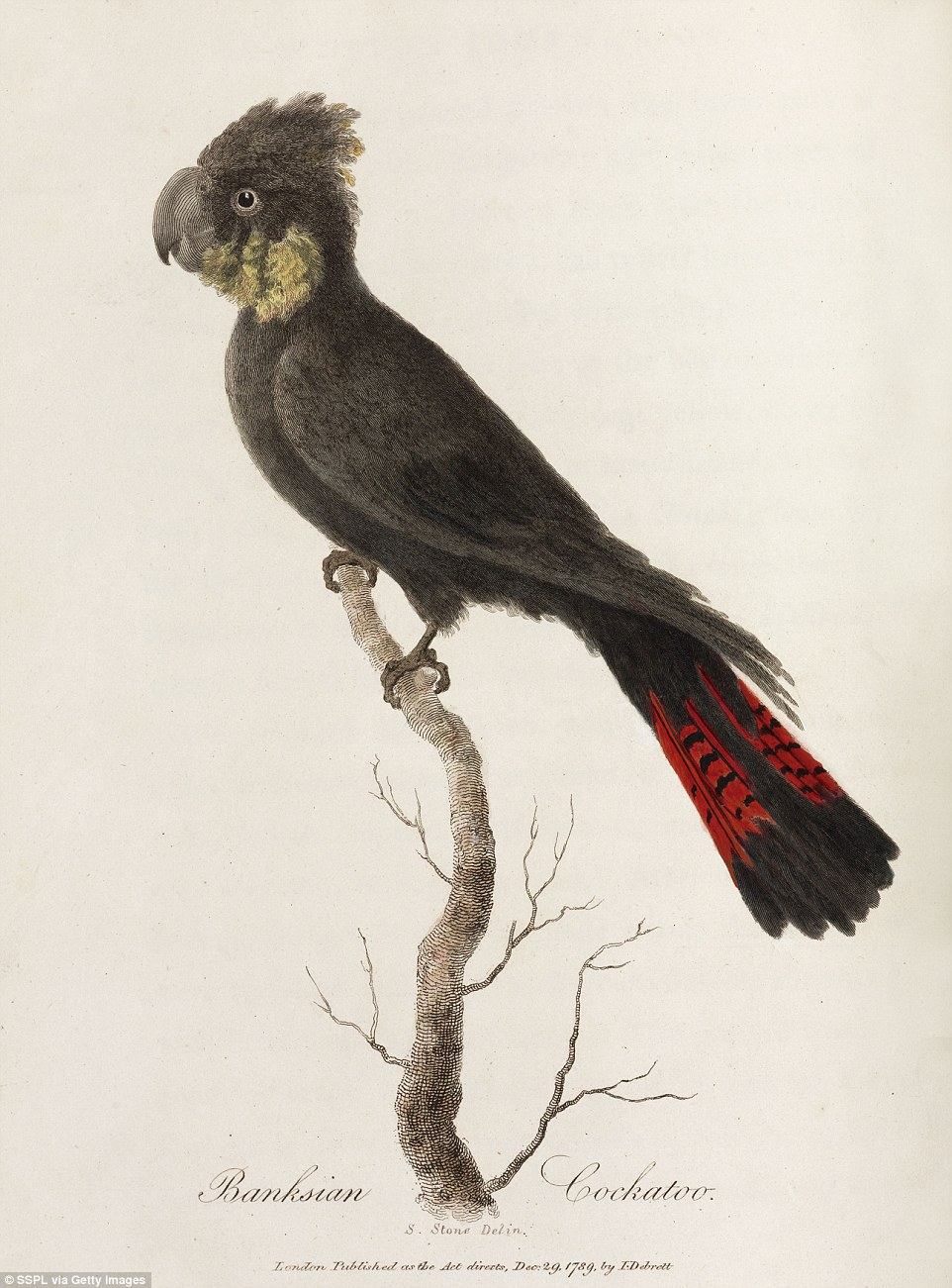 Australian Animals Drawings Fascinating Drawings From 1790 Capture Australia S Wildlife