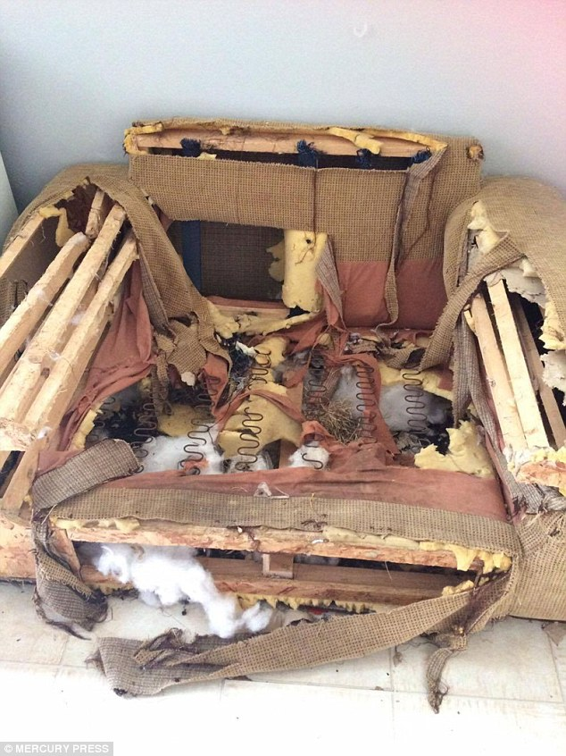Sofa Yorkshire Warrington Rescue Pup Destroys Doors And A £2,000 Sofa But