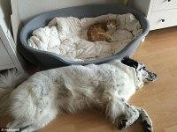 Forlorn dogs shown who's boss as they're ousted from their ...