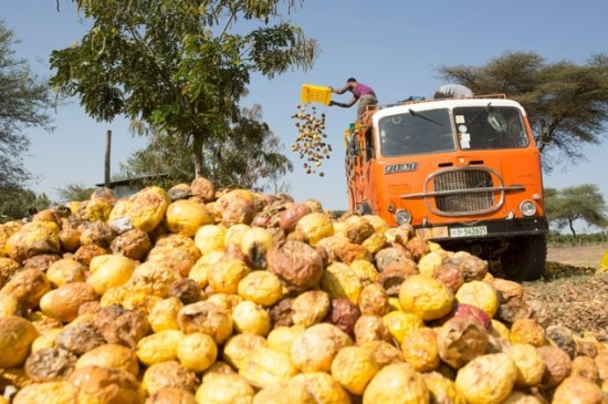 Workers of AfricaJuice had to toss several tonnes of passion fruit that could no longer be processed after the farm was attacked by protesters