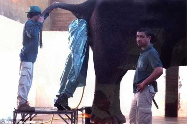 The exact nature of this task is unclear, but what we do know is that the worker pictured is quite far up an elephant's bottom, and there's nothing fun about that