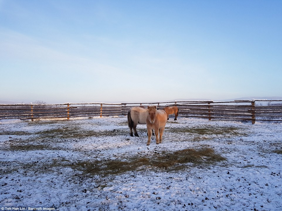 Photos Show How Yakut Horse Survives Winter Temperatures