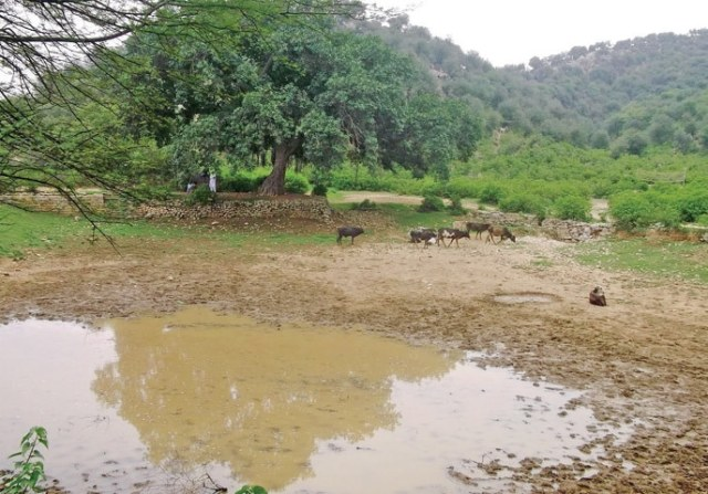 A dry pond in Takwaan village. — Photos by the writer