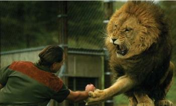 Safari Animal Wallpaper Lion Man Nature What Happens Next On Lion Man With