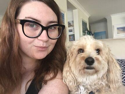 Chihuahua sitter babysitter Sitting Gumtree Australia Wyong Area - pet babysitter