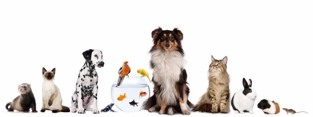 house sitter, dog walker, holiday? have pets? fish? dog? cat - pet babysitter