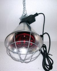 Heat Lamp Poultry Puppies Dog Kittens Piglets Animals 175W ...