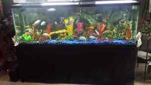 130 gallon fish tank with fish 130 gallon fish tank