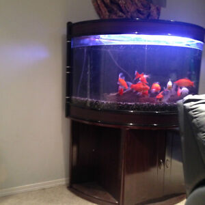 Fish Tank | Buy or Sell Pet Accessories in Edmonton | Kijiji